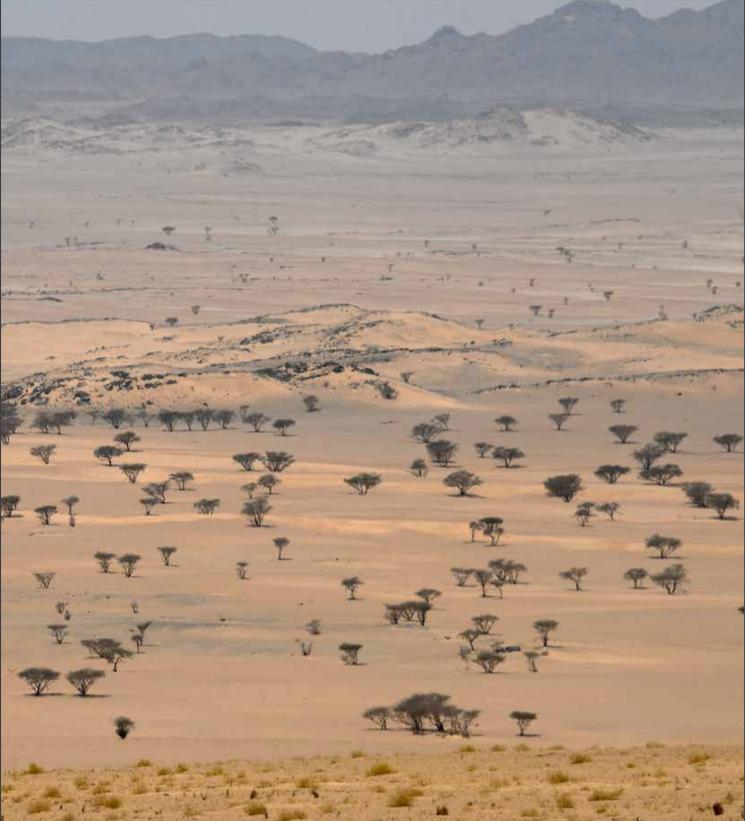 dakar-2020-chapitre-iii-au-royaume-des-sables-1152-5.png